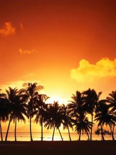 Пальмы на фоне красного заката украсят ваш смартфон Nokia N78