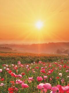 Утреннее солнышко освещает ярко цветущую поляну
